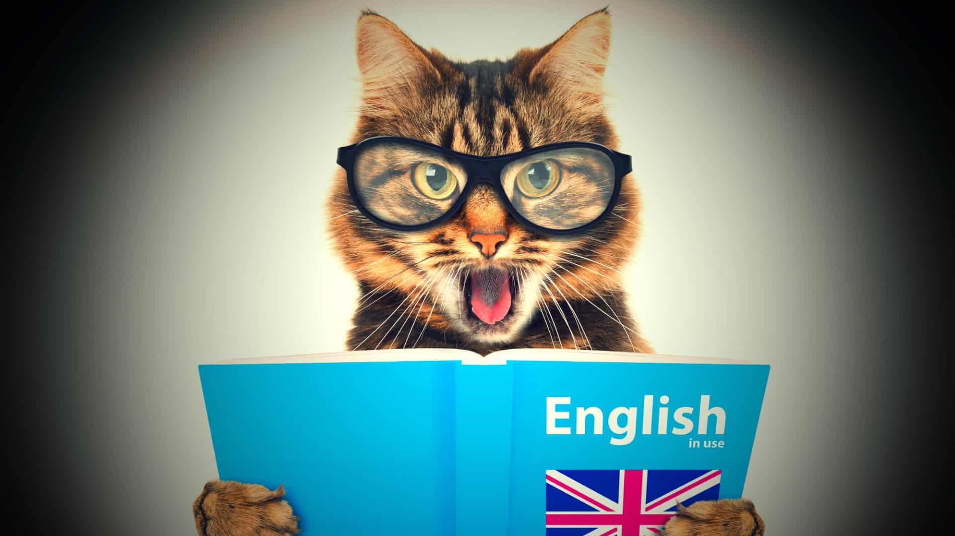 expressoes-idiomaticas-1